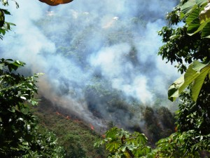 Slash and burn to convert rainforest into cattle land.