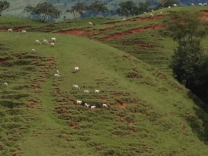 Rainforest converted to cattle pastures is not sustainable.