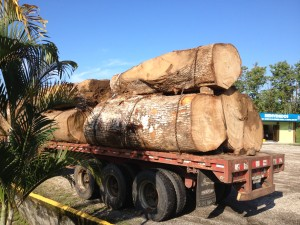 Deforestation is alive and well in Costa Rica.